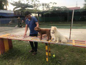 Huấn luyện chó trong chuồng như thế nào?