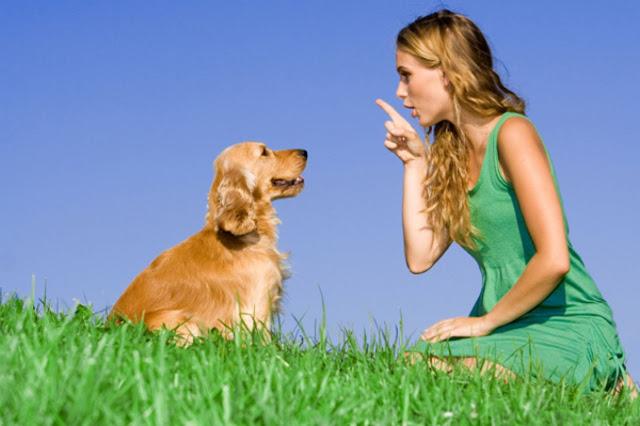 Một số lệnh huấn luyện chó cơ bản thực hiện dễ dàng tại nhà